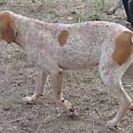 hounds3_8-4-00.jpg