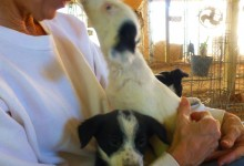 """S"" puppies arrive. Had been slated for euthanasia."