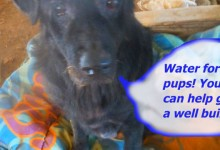 Water for Pups - DONATION CHALLENGE!