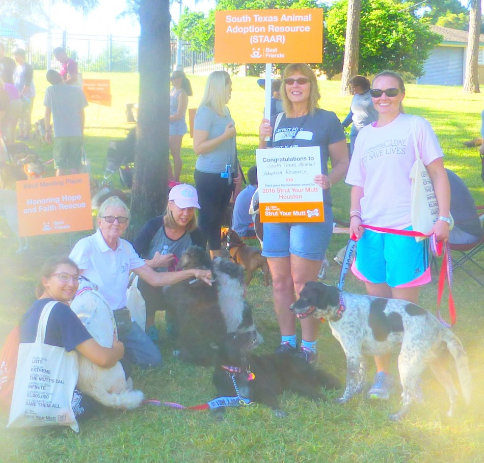 Strut Your Mutt time is here.Join us at Stude Park in Houston, Tx on Oct 13.